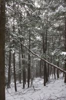 Snow and Woods -2 by mjranum-stock