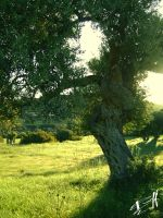 Olive tree 2 by Tornquist