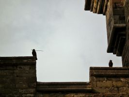 wray castle jackdaws by harrietbaxter