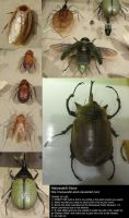 Assorted Insects Stock 6 by Melyssah6-Stock