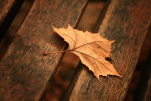 Autumn leaf by ferrohanc