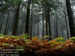 What a foggy forest by AngelOfDarkness089