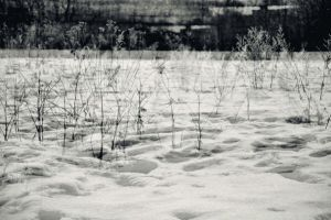black and white fields by Greensupersheep