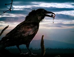 Crow by jackodeco