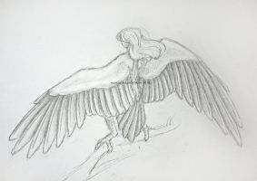 Wingspan by bofink