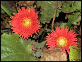 Red Flowers with flash by p858snake