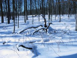621 - snow branches by WolfC-Stock