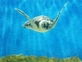 Sea Turtle by iDoux