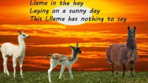 Llamas by Foreststone