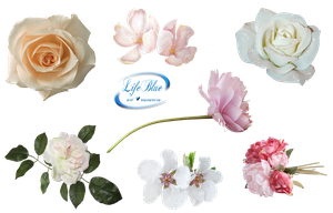 Beautiful flowers - PNG by lifeblue