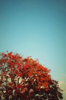 My colorful autumn by LeaLion