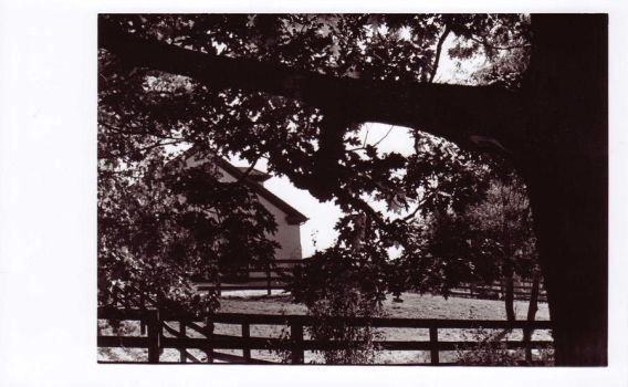 Barn through the trees by AlicesInsanity