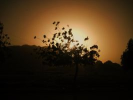 lonely tree sunset by mihi2008