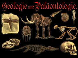 Paleontology Images PNG by ValerianaSTOCK