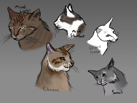 Cat Head Sketches by pigeontree2000