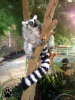 SOLD Poseable ring tailed lemur art doll by CreaturesofNat