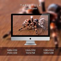 Tarantula - Wallpaper Pack by ScorpionEntity
