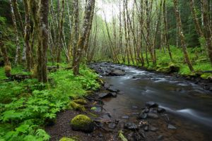 Oregon Creek Stock 1 by leeorr-stock