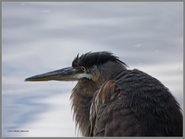 Close to a Heron by Mogrianne