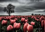 Fields of Pink by StephGabler