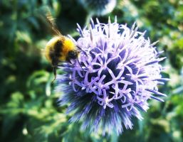 Hovering Bee by Madame-Mabsoot