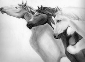 My Horses by Jajajorge