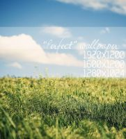 Perfect Wallpaper Pack by solefield