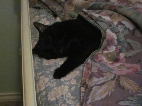 Save Fella with kitty by cantdrawjoinedforfun