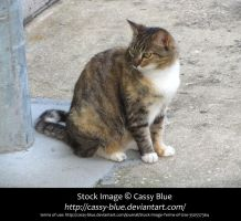 Cat Stock 15 by Cassy-Blue