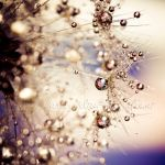 Sparkling Nature by dansch