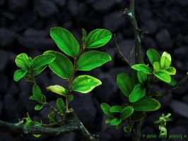 Save-our-GREEN-1 by rajjib