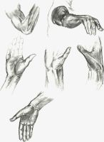 Hands by TheLittleCrow