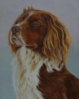 Spaniel by wildaengus