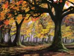 The Autumn Grove by jjpeabody