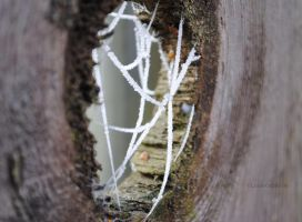 Through the Web by louiecablouie