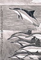 A Spinner dolphin family by namu-the-orca
