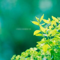 - Private Herbs - by S-Patriot