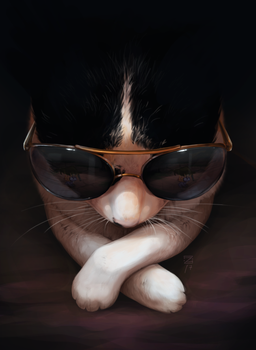 The cat with the sunglasses by Zietro