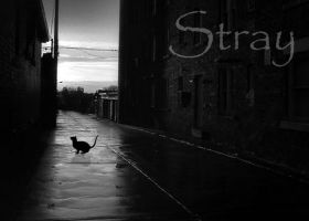 Stray by DevWinger