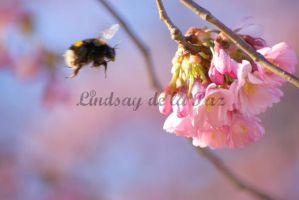 Bee and Blossom by lindsaydelapaz