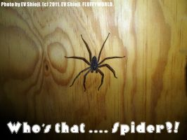 Ph - Spider 2011 by EV133