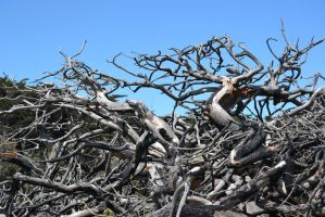 Gnarled Dead Trees Stock1 by jojo22