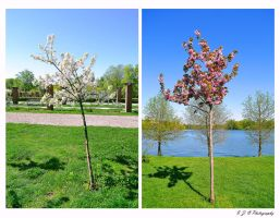 spring trees by Iulian-dA-gallery