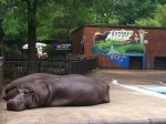 Memphis Zoo Mural finished by hyronomous