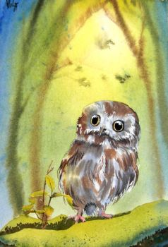 A little owl by MagdalenaWolff