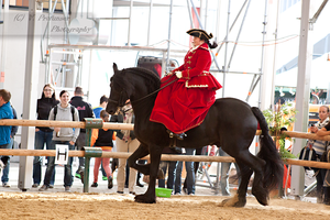 Sidesaddle Friesian_16 by CalyHoney