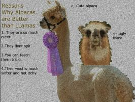 Alpacas are better than Llamas by clarinetplayer