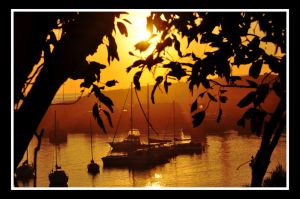 Harbour Through Trees by baz300388