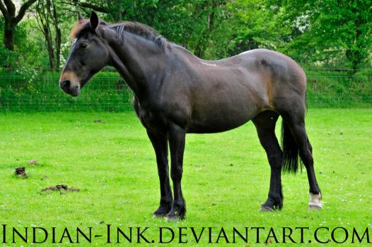 Seal Brown Friesian Mix 2 by Indian-Ink
