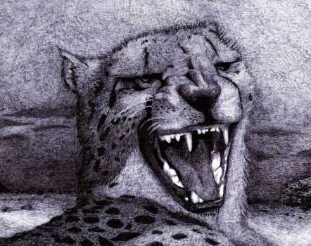 Cheetah laugh by patyfer